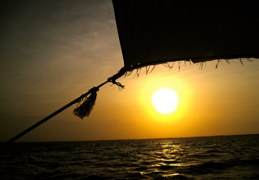 INSPIRATION_Beach & Dive 10 starsofafricase__1428401392_37.250.222.113
