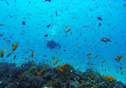 INSPIRATION_Beach & Dive 4 starsofafricase__1428401306_37.250.222.113
