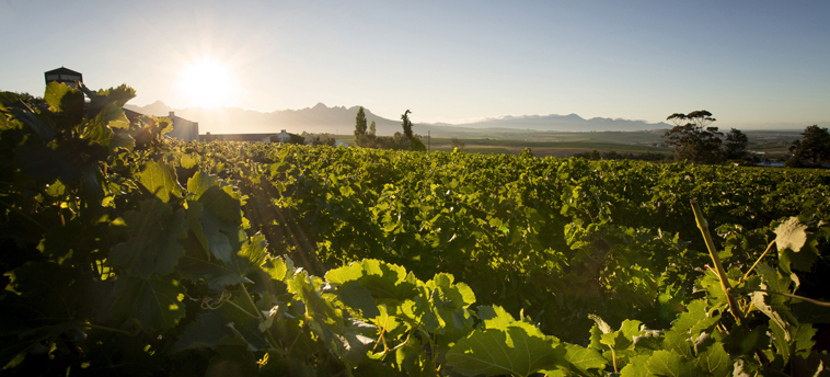 INSPIRATION_Cape Winelands 2 starsofafricase __1428404793_37.250.222.113
