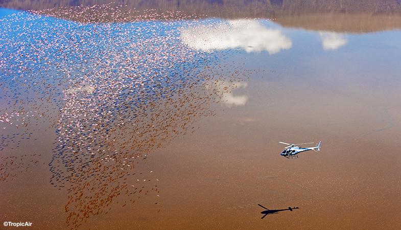 Safari med helikopter