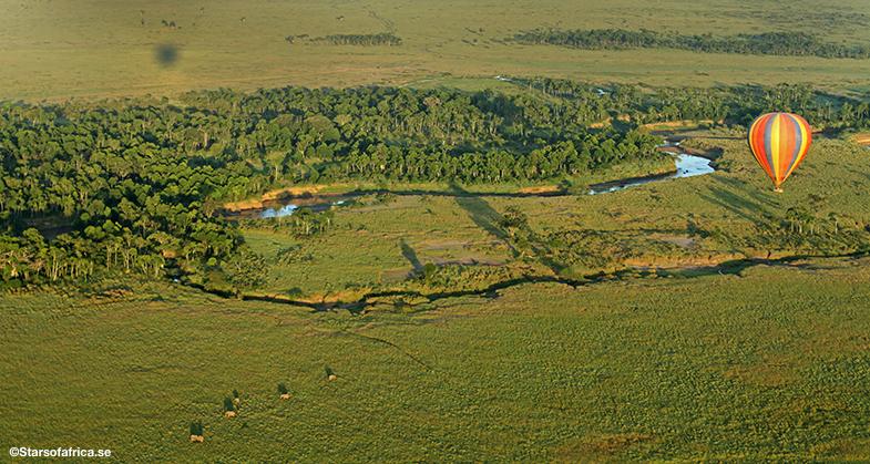 Luftballong Safari